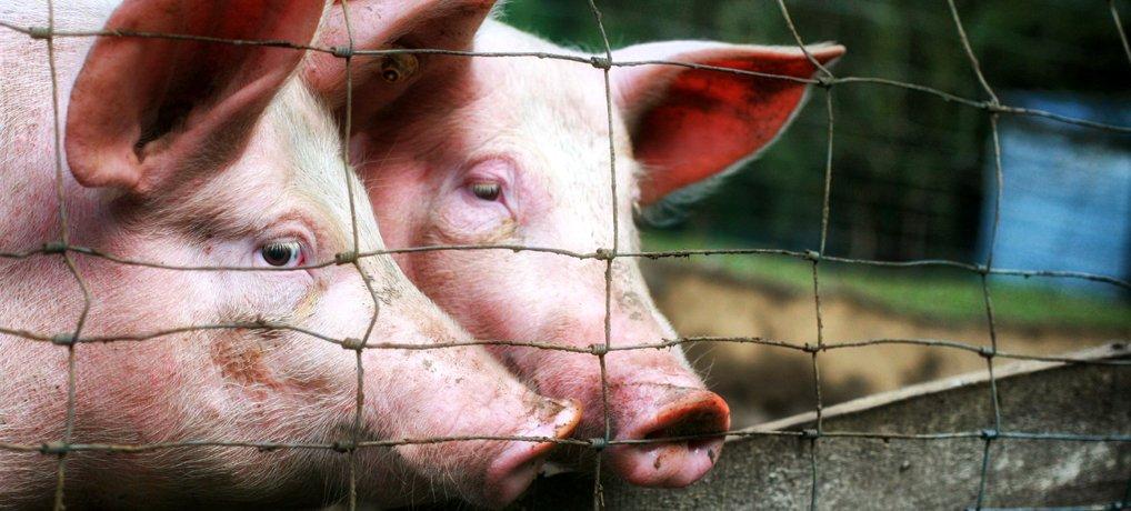 Fleisch glücklicher Tiere