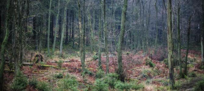 Wertvoll: Holz in Südwestfalen
