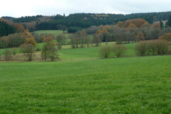 Muldental_Hangmoor_Braucke_Foto_NaturschutzzentrumMK