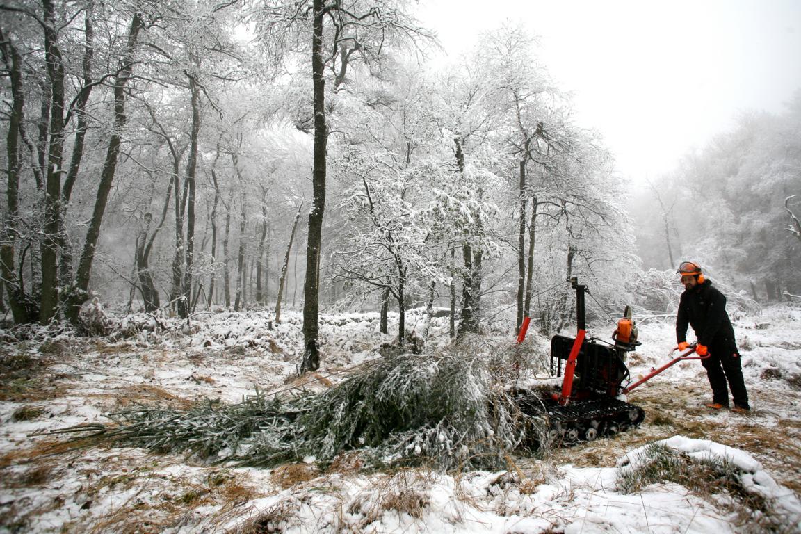 Mit dem Forstraupenschlepper gegen den Fichtenbestand © 2016 Foto: Stefanie Schildchen