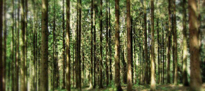 Für gegenseitigen Respekt im Wald