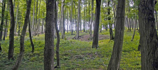 Nach Orkantief Wälder nicht betreten!