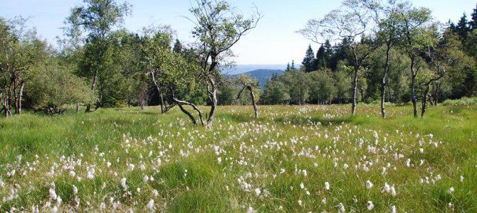Erweiterung der Naturschutzgebiete in Kraft